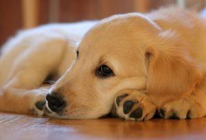 puppy-1187270_1920-1024x697